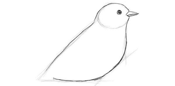 Как нарисовать птицу поэтапно карандашом