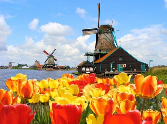 С миру по нитке: что привезти из Голландии