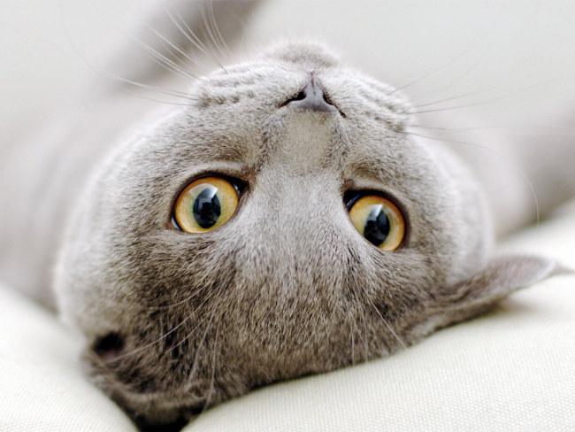 Как кошки лечат людей