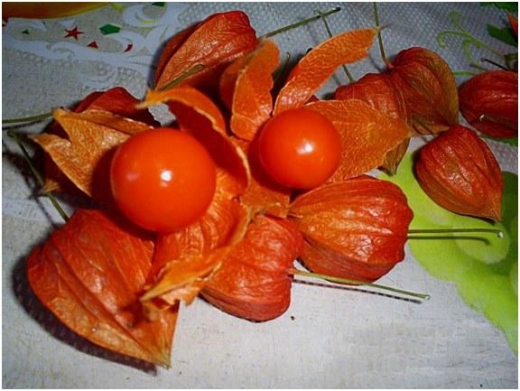 ягоды физалиса