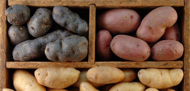 Почему картошка чернеет внутри при хранении