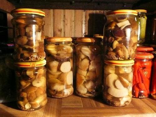 Сыроежки: простые и вкусные рецепты приготовления