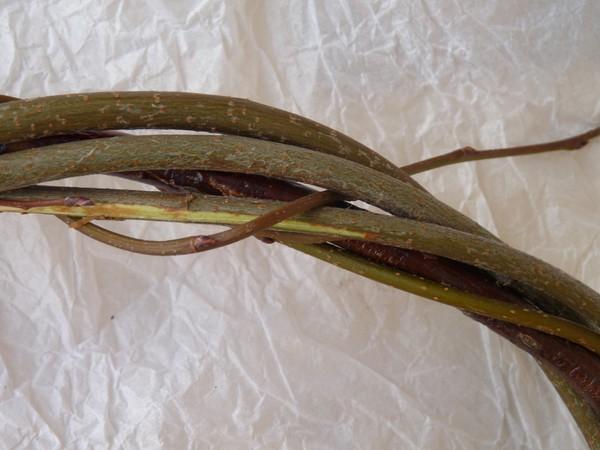 pletenie-iz-lozy-5 Особенности плетения корзин своими руками: заготовка лозы, инструменты и техники изготовления плетёных лукошек