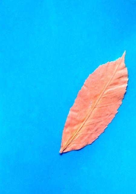 kartinki-iz-listev-belka-2 Картины из листьев и цветов своими руками для детского сада и школы