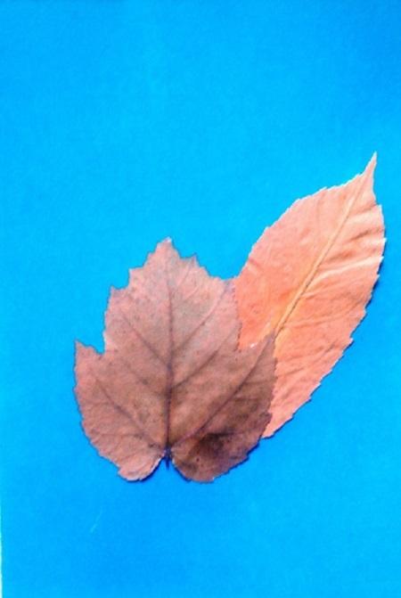 kartinki-iz-listev-belka-3 Картины из листьев и цветов своими руками для детского сада и школы