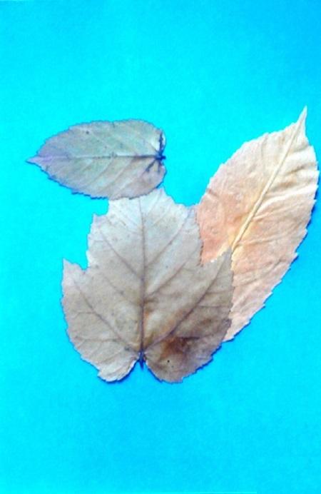 kartinki-iz-listev-belka-4 Картины из листьев и цветов своими руками для детского сада и школы