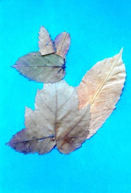 kartinki-iz-listev-belka-6 Картины из листьев и цветов своими руками для детского сада и школы