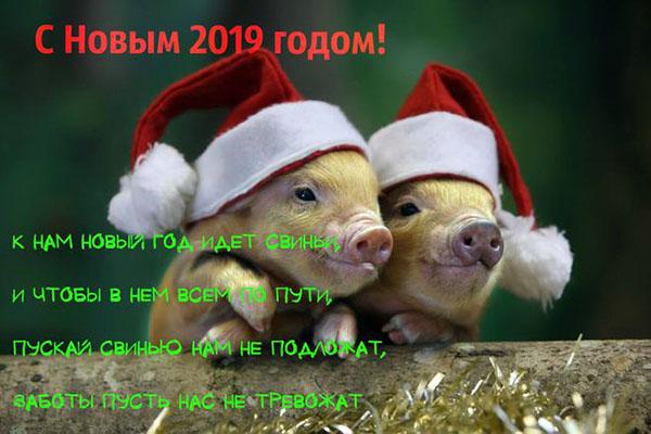 Смс с Новым 2019 годом Свиньи: красивые, смешные и прикольные